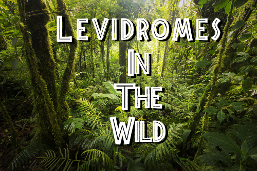 Levidromes in the Wild